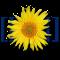 Webapps_icon